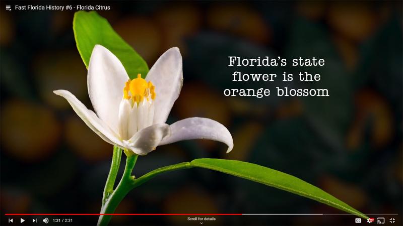 Fast Florida History #6 - Orange Blossom State Flower