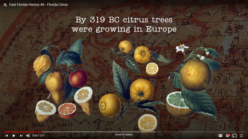 Fast Florida History #6 - Citrus in Europe by 319 BC