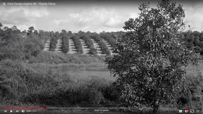 Fast Florida History #6 - Florida Citrus Production